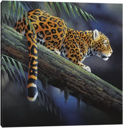 Jaguar In A Tree Canvas Art Print