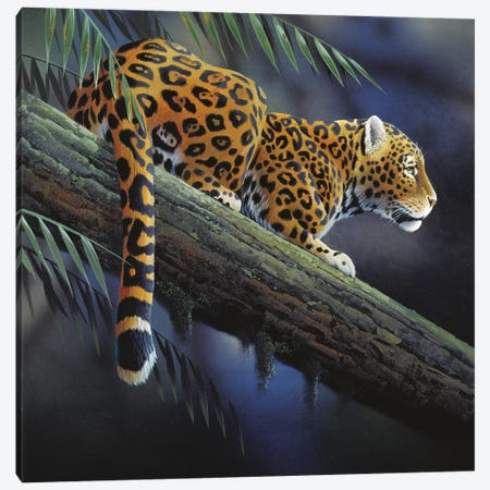 Jaguar In A Tree Canvas Print #WEE26} by Jan Weenink Art Print
