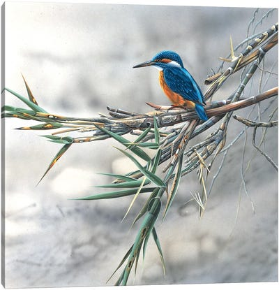 Kingfisher Canvas Art Print