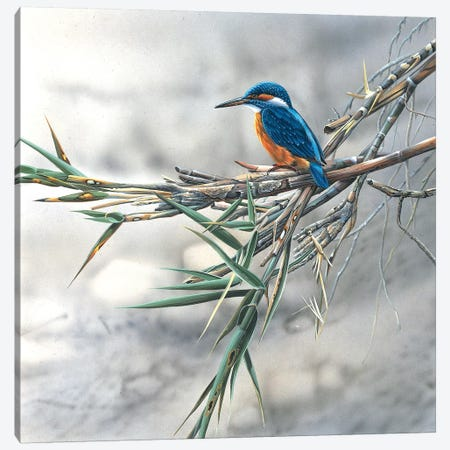 Kingfisher Canvas Print #WEE27} by Jan Weenink Art Print