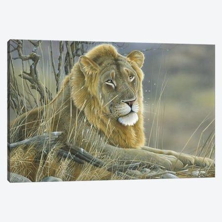 Lion Canvas Print #WEE28} by Jan Weenink Canvas Artwork
