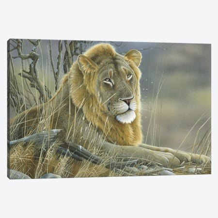 Lion Canvas Print #WEE28} by Jan Weenink Canvas Artwork