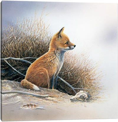 Little Fox Canvas Art Print