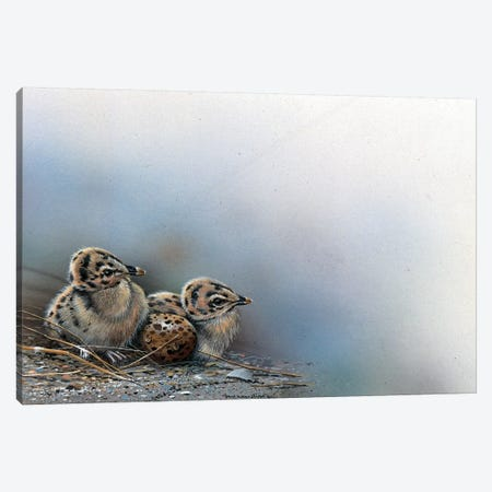 Baby Birds Canvas Print #WEE2} by Jan Weenink Art Print