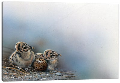 Baby Birds Canvas Art Print