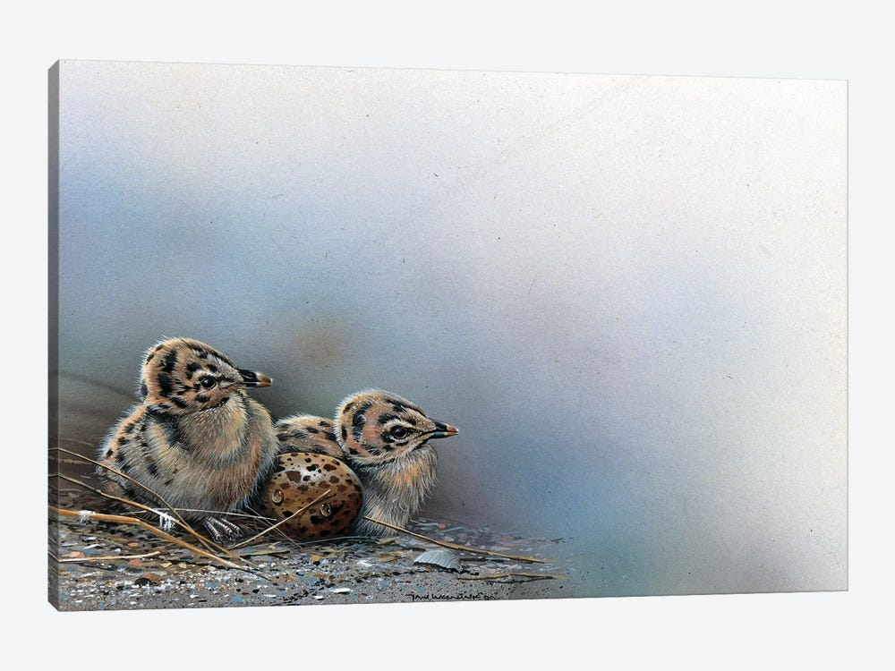 Baby Birds by Jan Weenink 1-piece Canvas Artwork