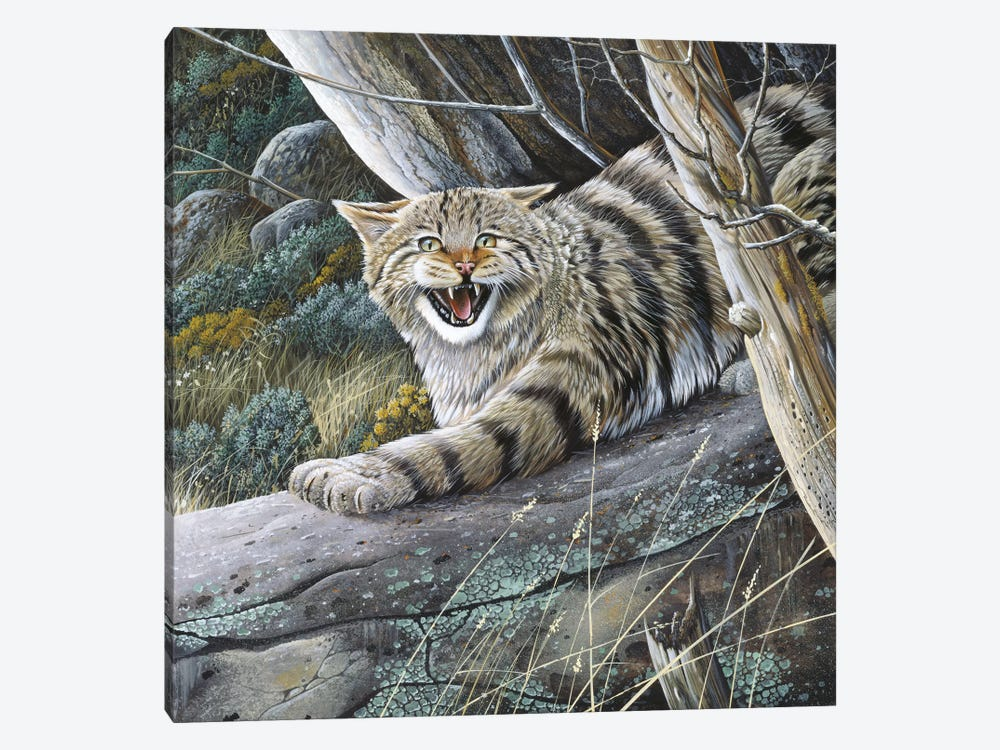 Lynx by Jan Weenink 1-piece Canvas Art Print