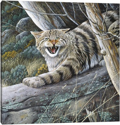 Lynx Canvas Art Print