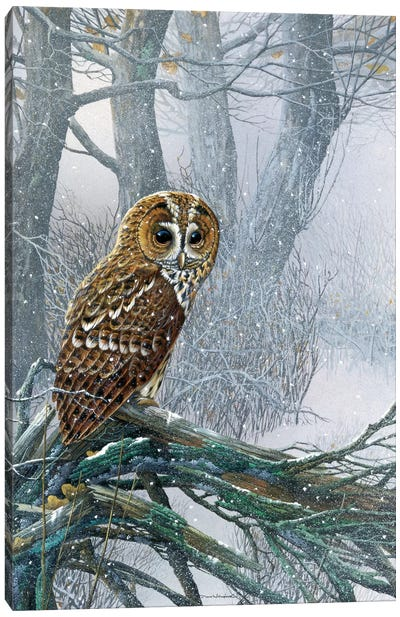 Owl In A Snowy Forest Canvas Art Print