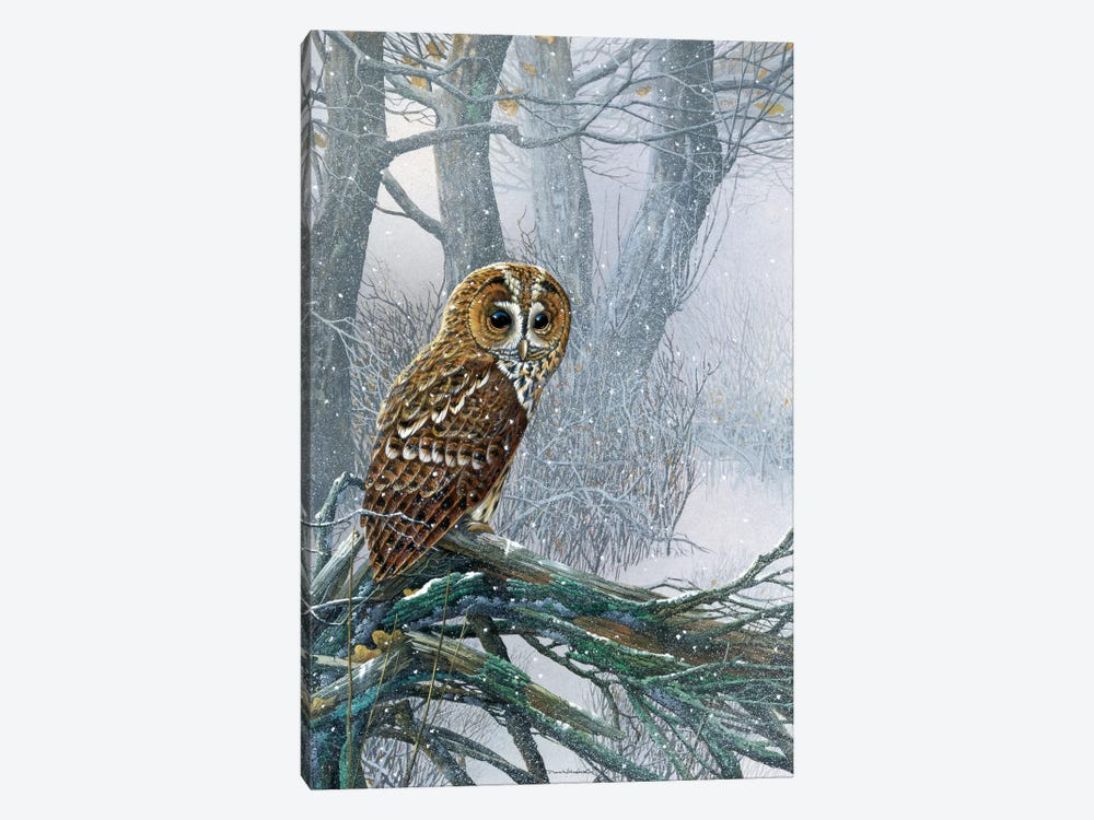 Owl In A Snowy Forest by Jan Weenink 1-piece Canvas Artwork
