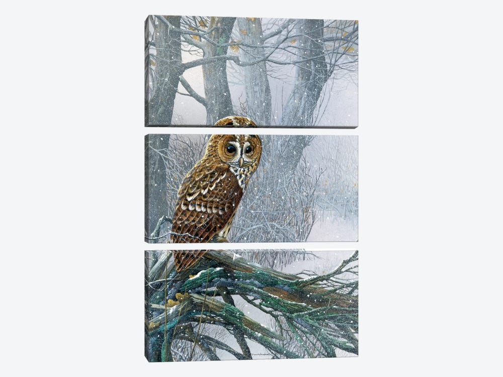Owl In A Snowy Forest by Jan Weenink 3-piece Canvas Wall Art