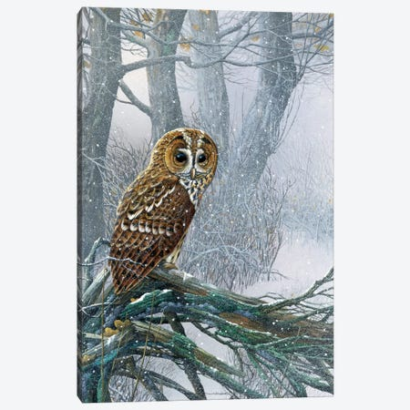 Owl In A Snowy Forest Canvas Print #WEE31} by Jan Weenink Art Print