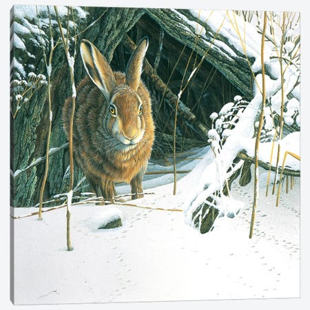 Rabbit Canvas Print #WEE34} by Jan Weenink Canvas Art