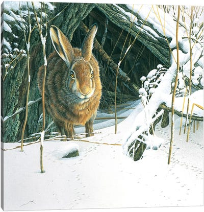 Rabbit Canvas Art Print