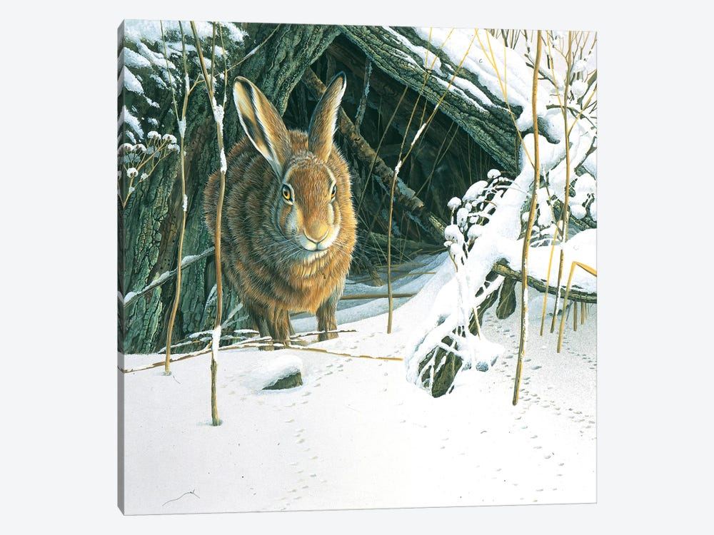 Rabbit by Jan Weenink 1-piece Canvas Print
