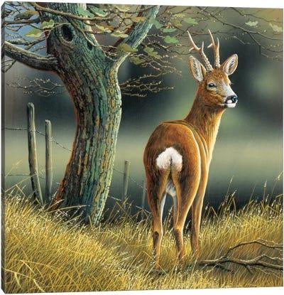 Reindeer Canvas Art Print