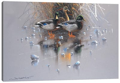 Three Ducks Canvas Art Print