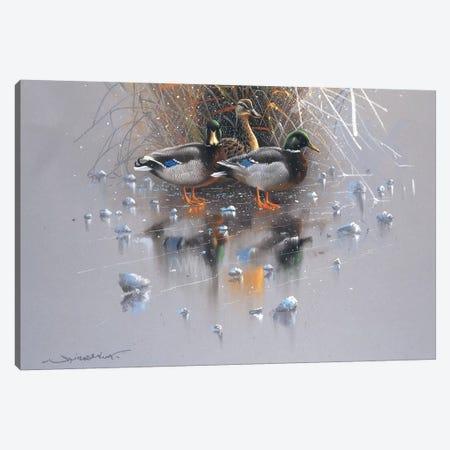 Three Ducks Canvas Print #WEE38} by Jan Weenink Canvas Art Print