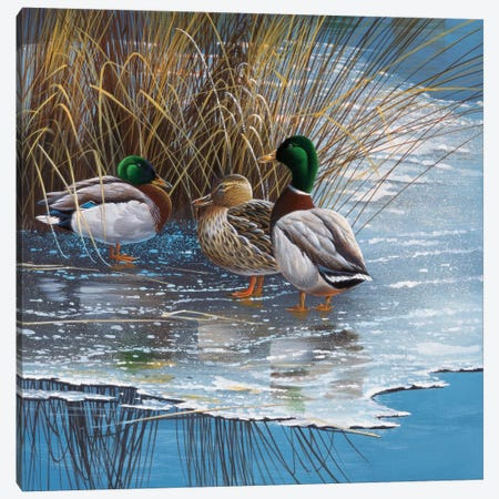 Three Ducks On Ice Canvas Print #WEE39} by Jan Weenink Art Print