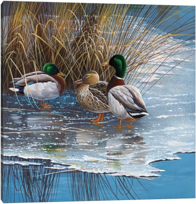 Three Ducks On Ice Canvas Art Print