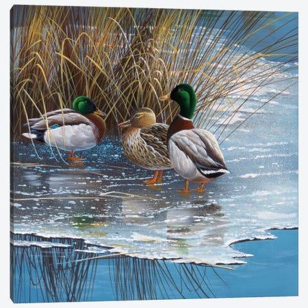 Three Ducks On Ice Canvas Print #WEE39} by Jan Weenink Art Print