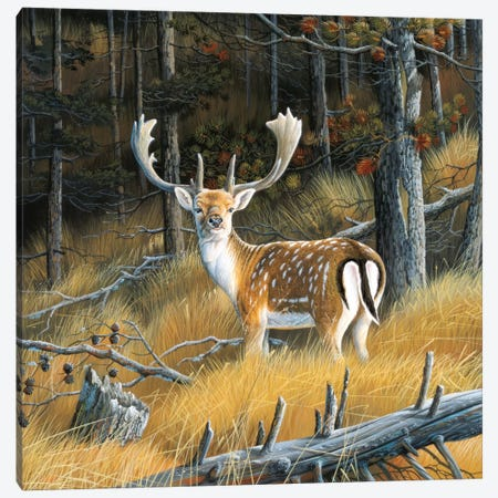 Beautiful Deer Canvas Print #WEE3} by Jan Weenink Canvas Print