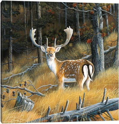 Beautiful Deer Canvas Art Print