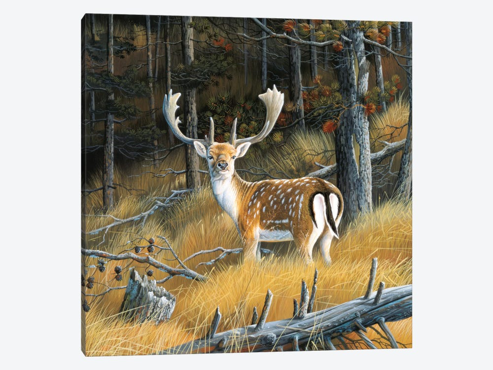 Beautiful Deer by Jan Weenink 1-piece Art Print
