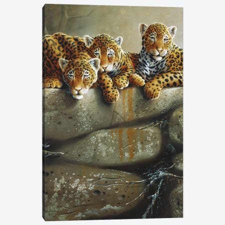 Three Little Tigers Canvas Print #WEE40} by Jan Weenink Canvas Art