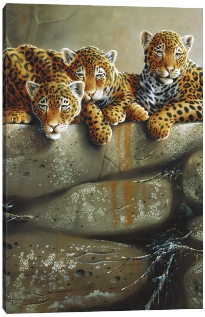 Three Little Tigers Canvas Art Print