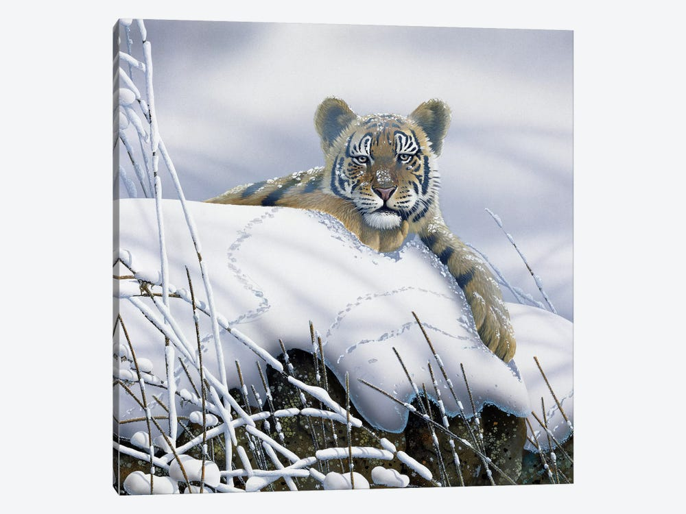 Tiger In The Snow by Jan Weenink 1-piece Art Print