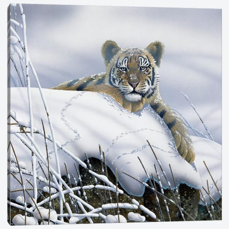Tiger In The Snow Canvas Print #WEE41} by Jan Weenink Canvas Wall Art