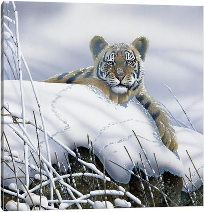 Tiger In The Snow Canvas Art Print