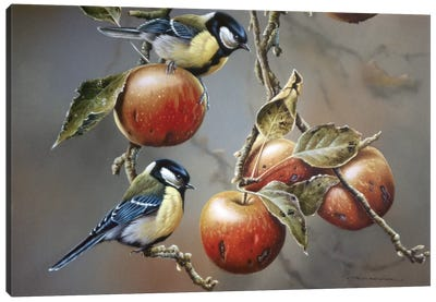 Two Birds With Apples Canvas Art Print
