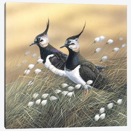 Two Lapwings Canvas Print #WEE45} by Jan Weenink Canvas Art Print