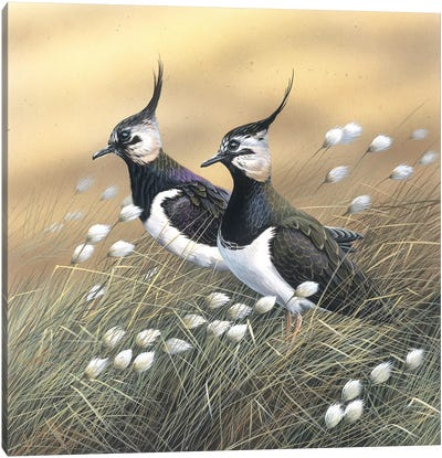 Two Lapwings Canvas Art Print