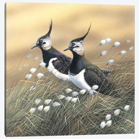 Two Lapwings Canvas Print #WEE45} by Jan Weenink Canvas Art Print