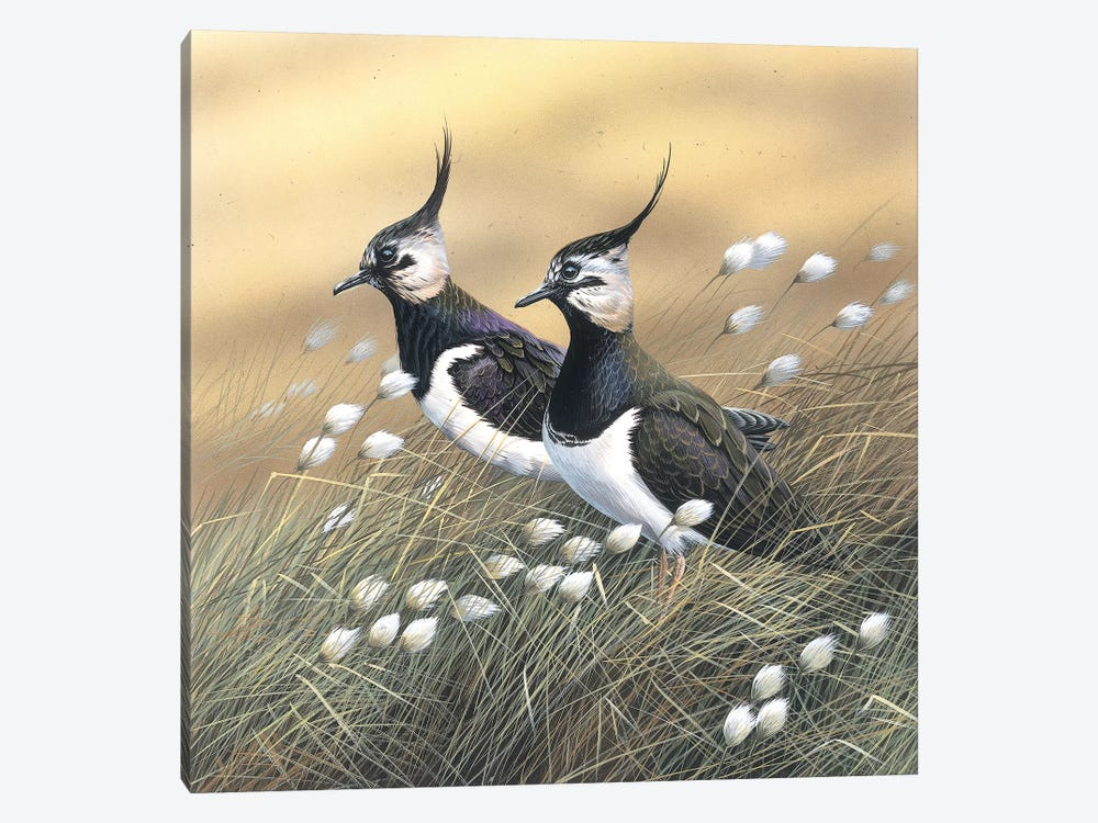 Two Lapwings by Jan Weenink 1-piece Canvas Art Print