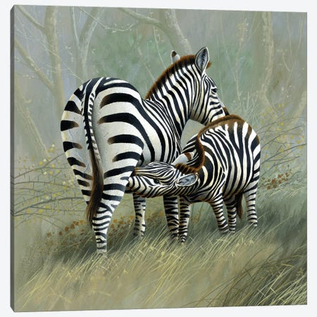 Two Zebras Canvas Print #WEE47} by Jan Weenink Art Print