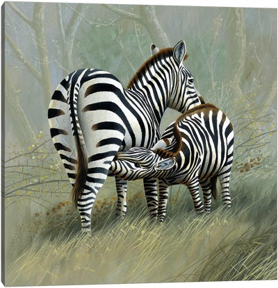 Two Zebras Canvas Art Print