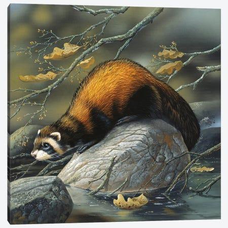 Beaver On A Rock Canvas Print #WEE4} by Jan Weenink Canvas Artwork