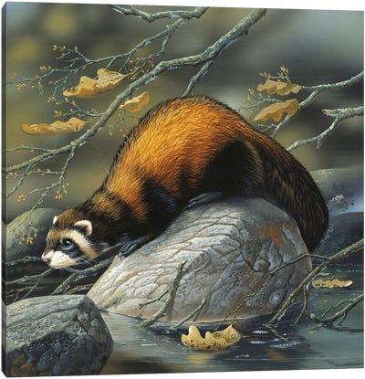 Beaver On A Rock Canvas Art Print