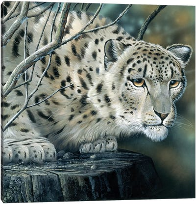 White Leopard Canvas Art Print