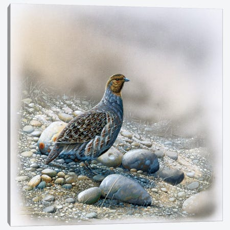 Bird Between Stones Canvas Print #WEE5} by Jan Weenink Canvas Wall Art
