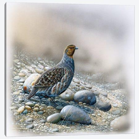 Bird Between Stones Canvas Print #WEE5} by Jan Weenink Canvas Wall Art