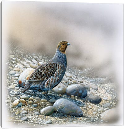 Bird Between Stones Canvas Art Print