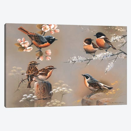 Bird Composition Canvas Print #WEE6} by Jan Weenink Canvas Art