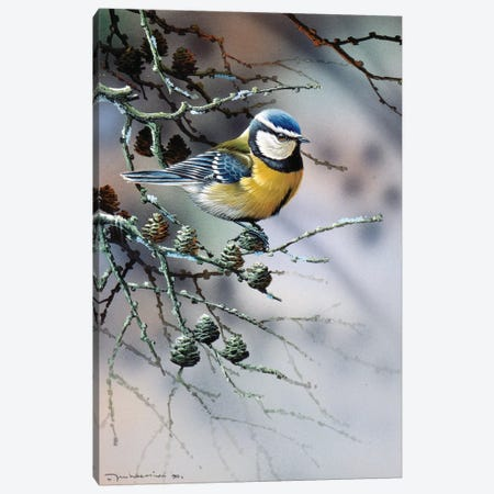 Bird In A Fir Tree Canvas Print #WEE7} by Jan Weenink Canvas Artwork