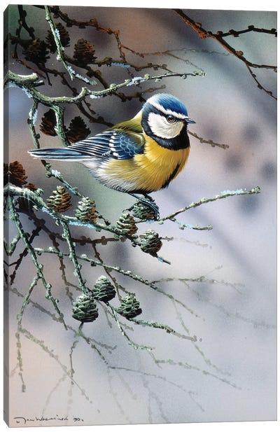 Bird In A Fir Tree Canvas Art Print