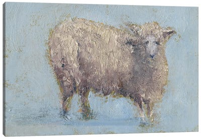 Sheep Strut I Canvas Art Print